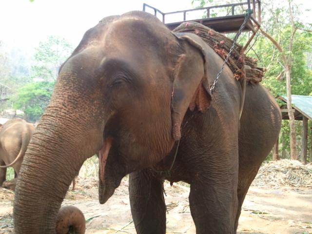 カレン族の村の象