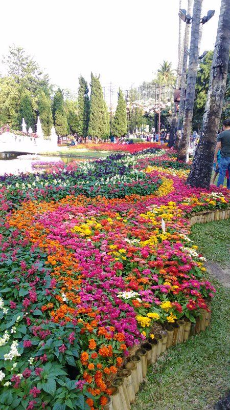 チェンマイの花畑