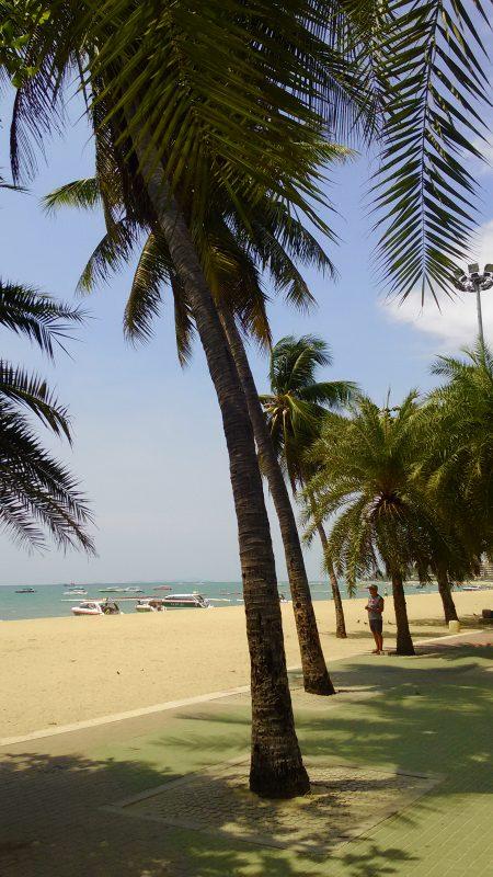 パタヤビーチとヤシの木