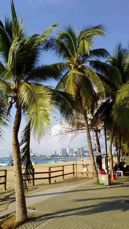 パタヤビーチとヤシの木(大)