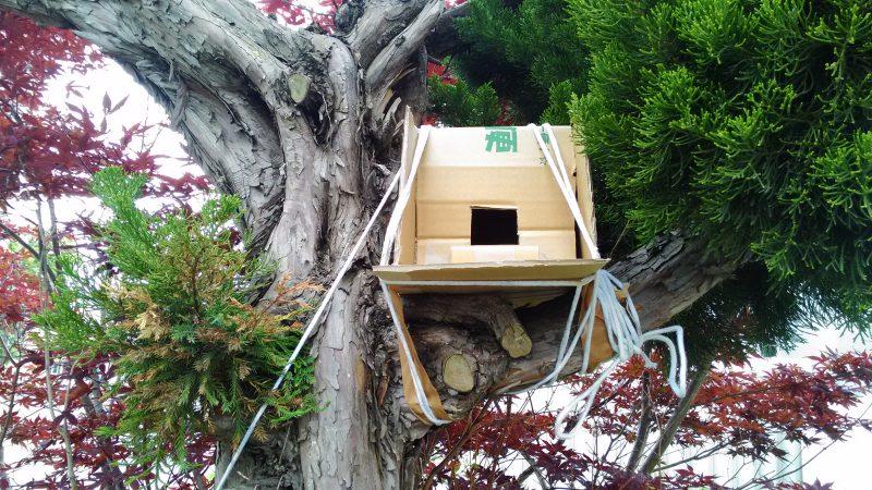 庭木に作った巣箱