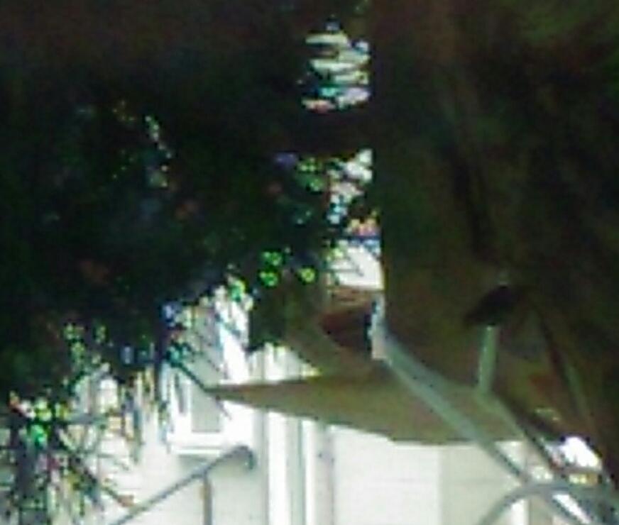 巣箱に乗った親鳥