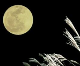 中秋の名月に萩原健一(ショーケン)のワンカップ大関のCMを思い出す。「名月を飲み干した後のうまさかな」