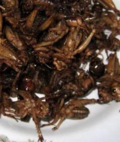 タイの昆虫食:kabutotai.net