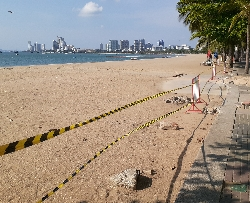 パタヤビーチに進入禁止の縄張り:kabutotai.net