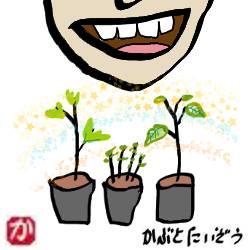 苗を育てる:kabutotai.net