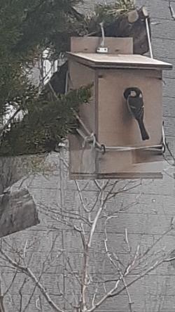 野鳥の巣箱:kabutotai.net