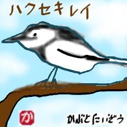 庭の木にかけておいた自作の巣箱に野鳥の小鳥「ハクセキレイ」が入った