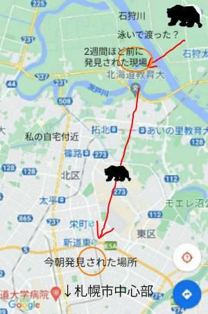 札幌市北区の熊:kabutotai.net